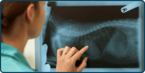 Digital Pet X-Rays