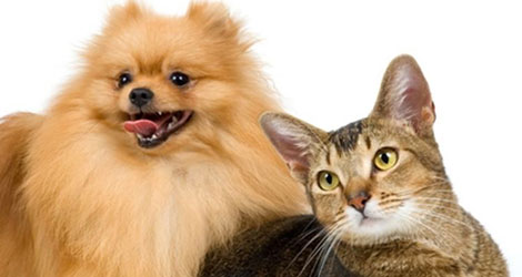 Is Your Cat & Dog Gaining Weight – The Common Causes Behind It